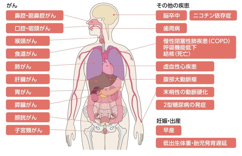 タバコの健康への影響